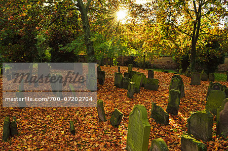 Sun through Trees in Jewish Cemetery, Worms, Rhineland-Palatinate, Germany Stock Photo - Rights-Managed, Image code: 700-07202704