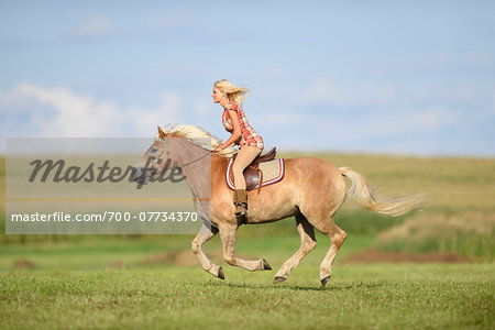 Young woman riding a haflinger horse in a field in summer, Upper Palatinate, Bavaria, Germany Stock Photo - Rights-Managed, Image code: 700-07734370
