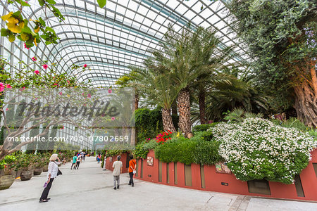 Flower Dome, Gardens by the Bay, Singapore Stock Photo - Rights-Managed, Image code: 700-07802659