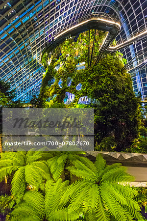 Cloud Forest conservatory, Gardens by the Bay, Singapore Stock Photo - Rights-Managed, Image code: 700-07802670