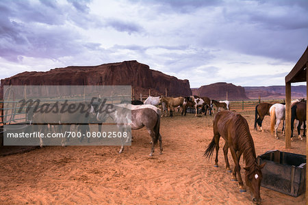 Horses on ranch with dark, cloudy sky, Monument Valley, Arizona, USA Stock Photo - Rights-Managed, Image code: 700-08002508