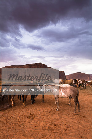 Horses on ranch with dark cloudy sky, Monument Valley, Arizona, USA Stock Photo - Rights-Managed, Image code: 700-08002509