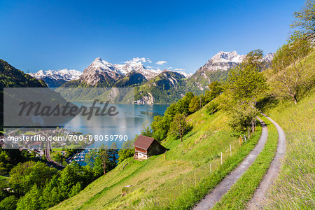 Alpine Meadow above Village of Sisikon at Tellsplatte at Urnersee in front of Mount Gitschen and Uri-Rotstock still Snow Covered, Canton of Uri, Switzerland Stock Photo - Rights-Managed, Image code: 700-08059790