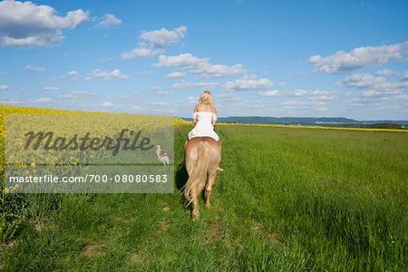 Back view of young woman riding a Haflinger horse in a meadow with Kooikerhondje dog walking beside, spring, Bavaria, Germany Stock Photo - Rights-Managed, Image code: 700-08080583
