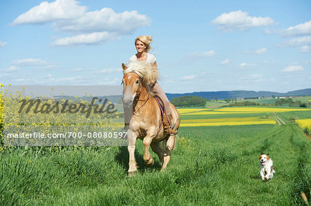 Young woman riding a Haflinger horse with Kooikerhondje dog running beside, spring, Bavaria, Germany Stock Photo - Rights-Managed, Image code: 700-08080597