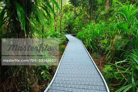Boardwalk in Daintree Rainforest, Cape Tribulation, Daintree National Park, Queensland, Australia Stock Photo - Rights-Managed, Image code: 700-08146052