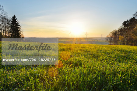 Meadow in Spring at Sunrise with Wind Turbines in background, Schippach, Miltenberg, Odenwald, Bavaria, Germany Stock Photo - Rights-Managed, Image code: 700-08225283