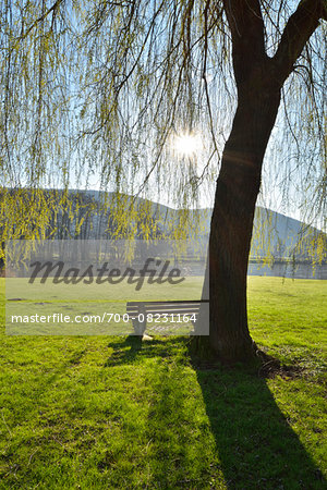 Weeping Willow with Bench and Sun in Spring, Laudenbach, Churfranken, Spessart, Bavaria, Germany Stock Photo - Rights-Managed, Image code: 700-08231164
