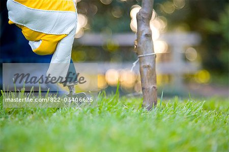 Close up of a man's hand planting a tree Stock Photo - Rights-Managed, Image code: 822-03406625