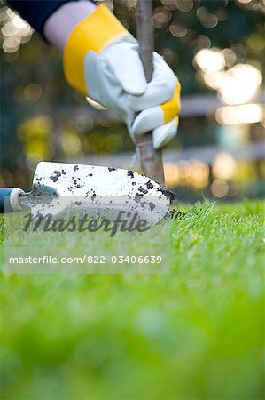 Close up of a man's hand planting a tree Stock Photo - Rights-Managed, Image code: 822-03406639