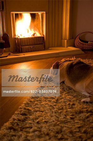 Beagle lying in front of a fire Stock Photo - Rights-Managed, Image code: 822-03407074