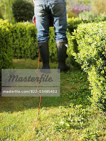 Back view of a gardener pruning a hedge with electrical trimmer, headless Stock Photo - Rights-Managed, Image code: 822-03485402