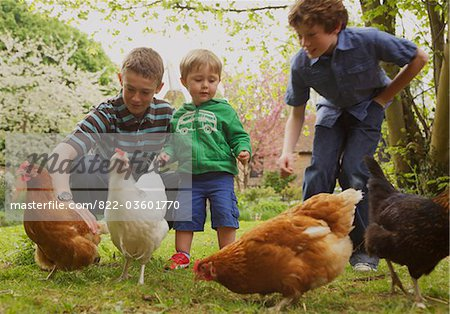 Children and Chickens in Garden Stock Photo - Rights-Managed, Image code: 822-03601770
