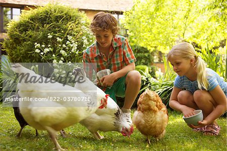 Boy and Girl Feeding Chickens in Garden Stock Photo - Rights-Managed, Image code: 822-03780711