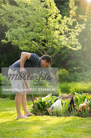 Man Gardening Stock Photo - Rights-Managed, Image code: 822-05948636