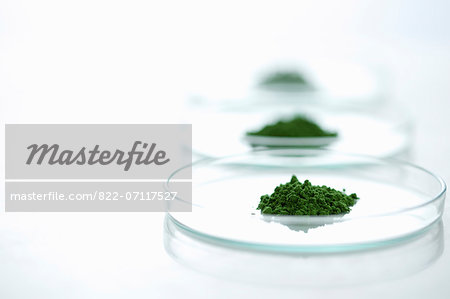 Petri Dishes with Wheatgrass Powder Stock Photo - Rights-Managed, Image code: 822-07117527