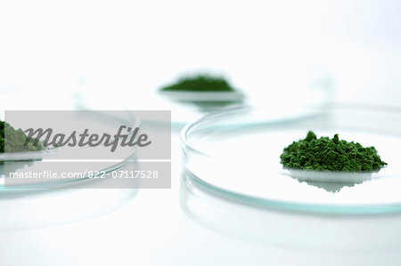 Petri Dishes with Wheatgrass Powder Stock Photo - Rights-Managed, Image code: 822-07117528
