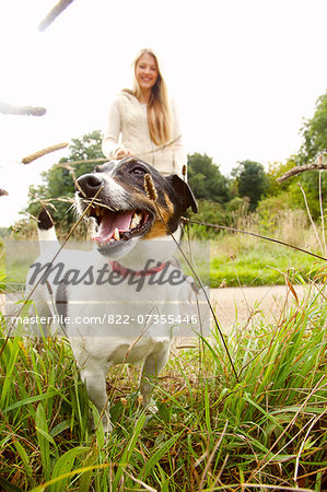 Jack Russell Dog with Young Woman in Background Stock Photo - Rights-Managed, Image code: 822-07355446