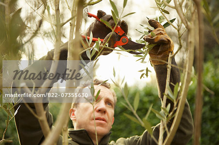 Gardener Pruning Tree Stock Photo - Rights-Managed, Image code: 822-07355630