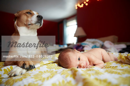 Dog Guarding Newborn Baby Girl Stock Photo - Rights-Managed, Image code: 822-08026273