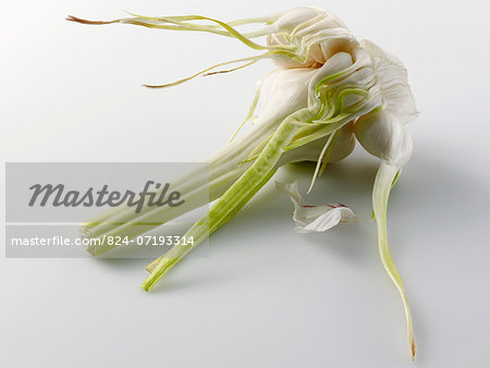 Fresh garlic Stock Photo - Rights-Managed, Image code: 824-07193314
