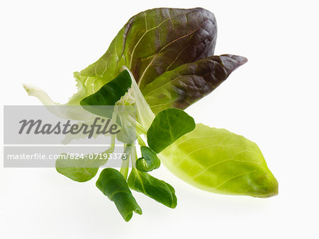 Salad leaves on a white background Stock Photo - Rights-Managed, Image code: 824-07193373