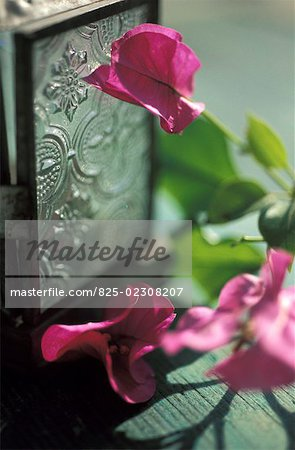 Decorative flowers and silver box Stock Photo - Rights-Managed, Image code: 825-02308207