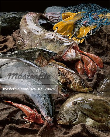Selection of fish from Brittany Stock Photo - Rights-Managed, Image code: 825-03628425