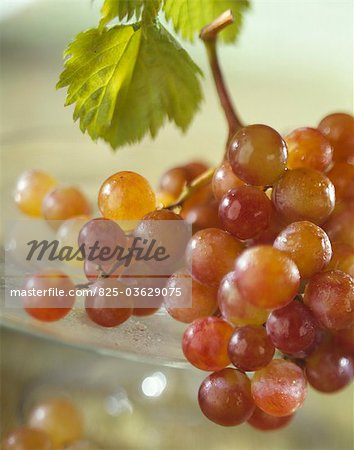 Grapes Stock Photo - Rights-Managed, Image code: 825-03629075