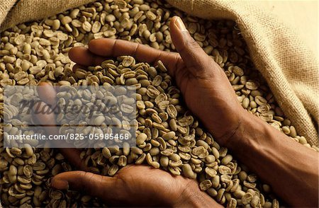 green coffee beans Stock Photo - Rights-Managed, Image code: 825-05985468
