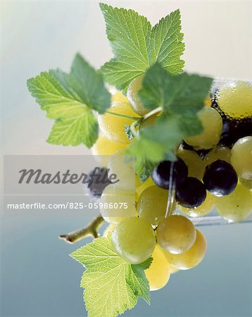 Grapes Stock Photo - Rights-Managed, Image code: 825-05986075