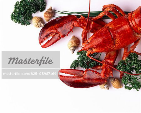 lobster Stock Photo - Rights-Managed, Image code: 825-05987169