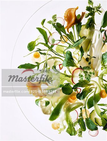 Leafy vegetable salad Stock Photo - Rights-Managed, Image code: 825-05989267