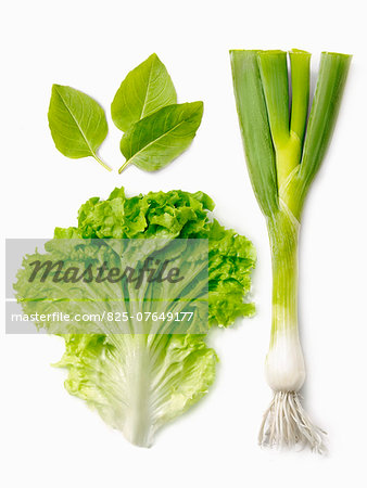 Leek,lettuce leaf and basil Stock Photo - Rights-Managed, Image code: 825-07649177