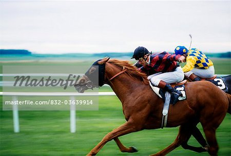 Horse Racing; Two Horses Neck In Neck During A Horse Race Stock Photo - Rights-Managed, Image code: 832-03639914