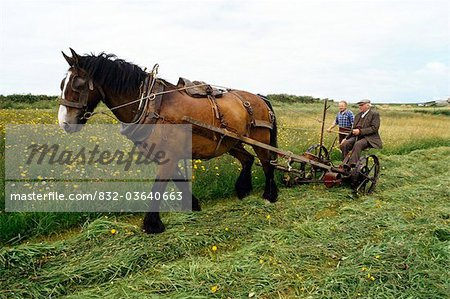 Cutting Hay, Ireland Stock Photo - Rights-Managed, Image code: 832-03640663