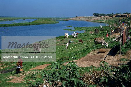 Latrines on the river bank in rough land grazed by cows in a slum in Dhaka, Bangladesh, Asia Stock Photo - Rights-Managed, Image code: 841-02712160