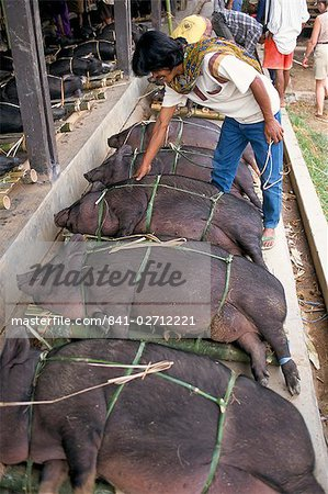 Pig market at Rantepao, Toraja area, Sulawesi, Indonesia, Southeast Asia, Asia Stock Photo - Rights-Managed, Image code: 841-02712221