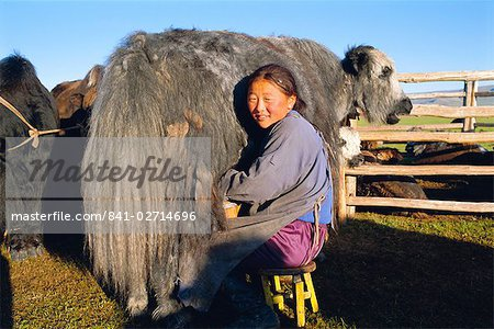 Milking a yak, Khoid Terkhiin valley, Arkhangal, Mongolia, Asia Stock Photo - Rights-Managed, Image code: 841-02714696
