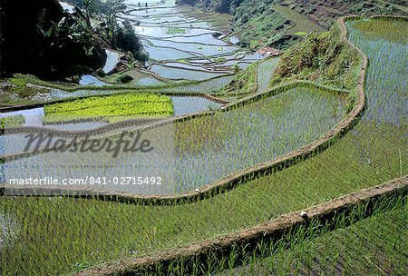 Rice terraces of the Ifugao people,UNESCO World Heritage Site, northern area, island of Luzon, Philippines, Southeast Asia, Asia Stock Photo - Rights-Managed, Image code: 841-02715492