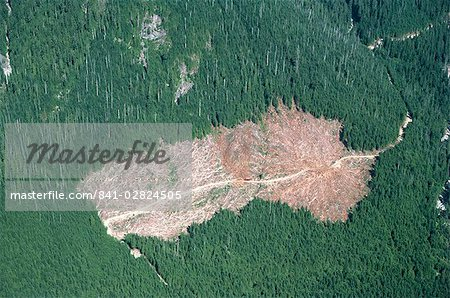 Logged area and surrounding forest from the air, British Columbia, Canada, North America Stock Photo - Rights-Managed, Image code: 841-02824505