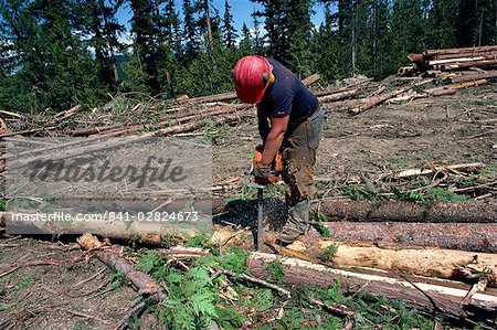 Cutting logs to size for transport, British Columbia, Canada, North America Stock Photo - Rights-Managed, Image code: 841-02824673