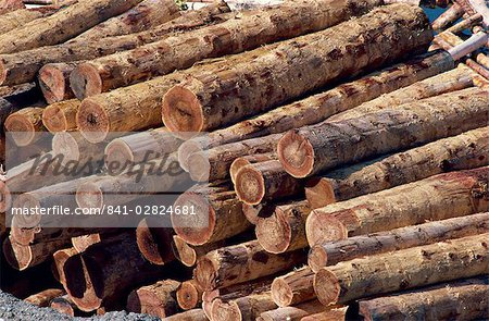 Logs awaiting processing at mill, British Columbia, Canada, North America Stock Photo - Rights-Managed, Image code: 841-02824681