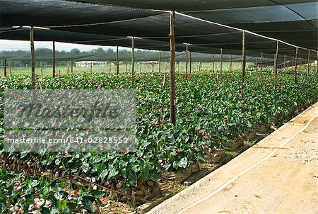 Plant and orchid nursery, near Arima, Trinidad, West Indies, Caribbean, Central America