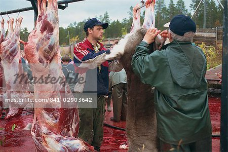 Annual Sami reindeer slaughter, Stora Sjofallet, Lappland, Sweden, Scandinavia, Europe Stock Photo - Rights-Managed, Image code: 841-02903642