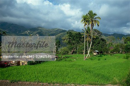 Rice paddies in a rural landscape at Moni, Flores, Indonesia, Southeast Asia, Asia Stock Photo - Rights-Managed, Image code: 841-02917585