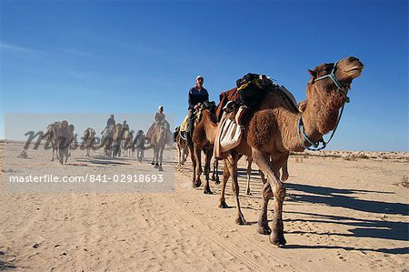 Tourists on camel trek, near Douz, Sahara desert, Tunisia, North Africa, Africa
