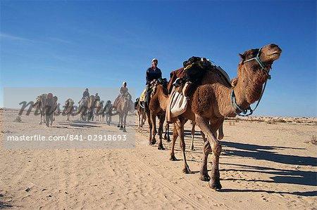 Tourists on camel trek, near Douz, Sahara desert, Tunisia, North Africa, Africa