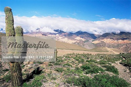 Cardones growing in the desert at 3000 metres, near Alfarcito, Jujuy, Argentina, South America Stock Photo - Rights-Managed, Image code: 841-02925458