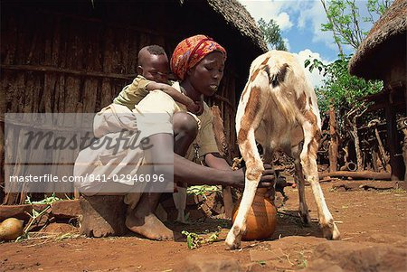 Mother with baby on her back milking goat, Harar, Ethiopia, Africa Stock Photo - Rights-Managed, Image code: 841-02946096